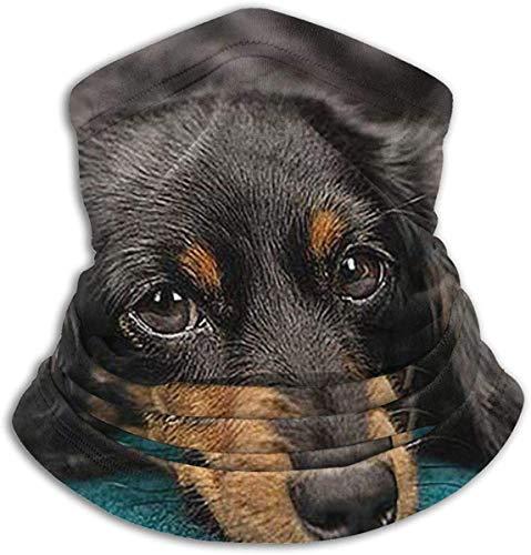 Dackel, kaltes Wetter, Halstuch, Fleece, elastisch, Gesichtsmaske für Männer und Frauen, Einheitsgröße