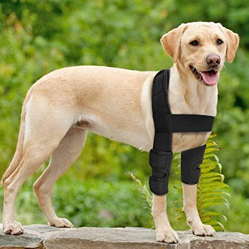 WXFEXIA Attelle pour pattes avant de chien - Protection du coude - Protège les plaies et les entorses dues à l'arthrite pour éviter les blessures et les entorses ou la marche (L)