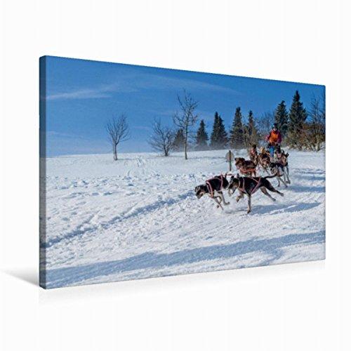 Premium Textil-Leinwand 75 x 50 cm Quer-Format Schlittenhundesport   Wandbild, HD-Bild auf Keilrahmen, Fertigbild auf hochwertigem Vlies, Leinwanddruck von Heiko Eschrich - HeschFoto