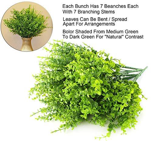 Boic Plantas