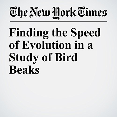 Finding the Speed of Evolution in a Study of Bird Beaks copertina
