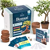 nature's blossom bonsai tree kit - grow 4 types of bonsai trees from seed. indoor / outdoor
