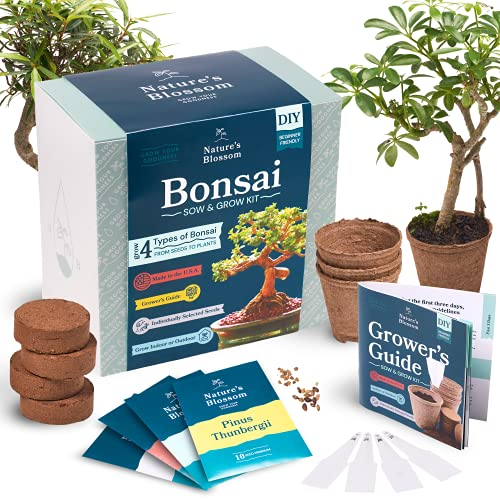 Blossom Bonsai Tree Kit
