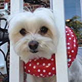 Puppy Bumpers Rainy Day (Water Resistant) Red Dot Up to 10' - Made in USA Stuffed Safety Fence Collar to Keep Your pet Safely on The Right Side of The Fence.