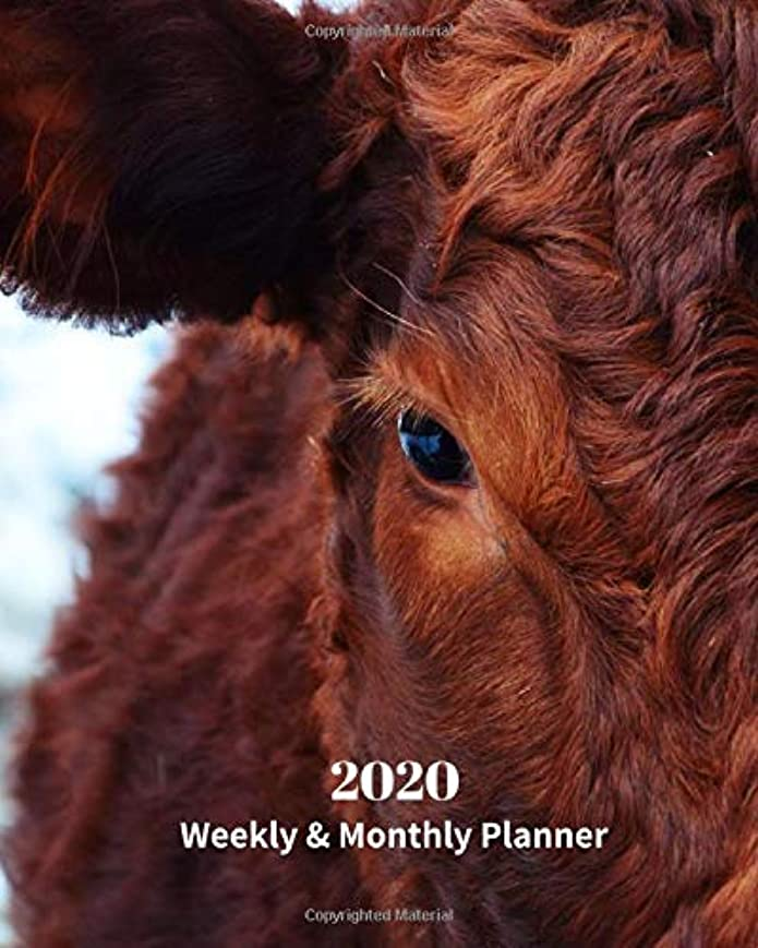 洪水絶縁するナース2020 Weekly and Monthly Planner: Brown Cattle - Monthly Calendar with U.S./UK/ Canadian/Christian/Jewish/Muslim Holidays– Calendar in Review/Notes 8 x 10 in.-Wildlife Ranch Animals Nature