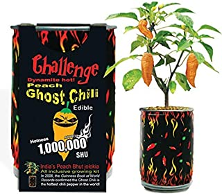 ghost chili pepper plants for sale