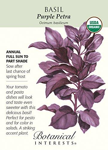 Violet Petra basilic graines - 500 mg - Bio
