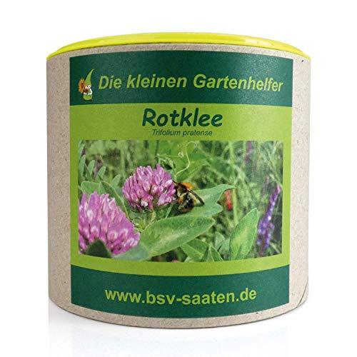 Keimsamen Rotklee 250g I Samen zur Bodenverbesserung I Ideal als Bienenweide & Vorkultur für Gemüse I Zertifiziertes Saatgut für 50 m²