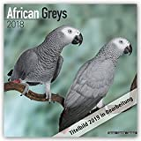 African Grey Calendar - African Grey Parrot Calendar - Parrot Calendar - Calendars 2020 - 2021 Wall Calendars - Bird Calendars - Monthly Wall Calendar by Avonside