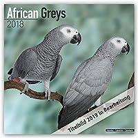 African Greys 2021 Wall Calendar
