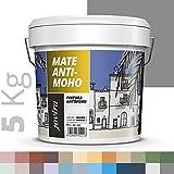 PINTURA ANTIMOHO, evita el moho, resistente a la aparición de moho en paredes, aspecto mate. (5 KG, GRIS OTOÑO)