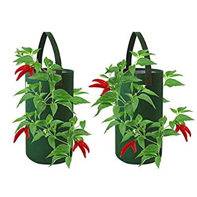 Pri Gardens Hanging Aeration Planter for Hot Peppers, Strawberries and Herbs | Eight Holes Per Planter