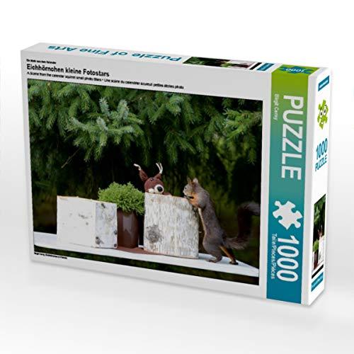 CALVENDO Puzzle Eichhörnchen kleine Fotostars 1000 Teile Lege-Größe 64 x 48 cm Foto-Puzzle Bild von Birgit Cerny