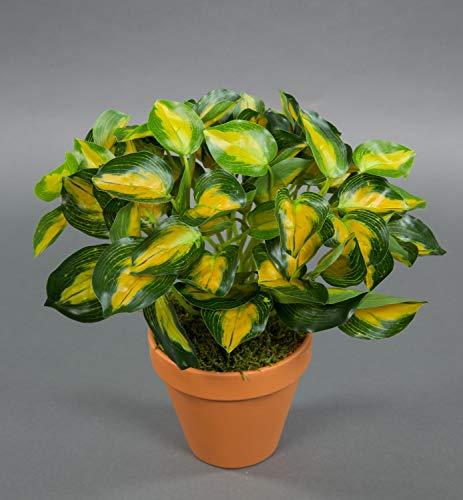 Seidenblumen Roß Buntnessel 28cm grün-gelb im Topf ZF Kunstpflanzen künstliche Pflanzen Nessel