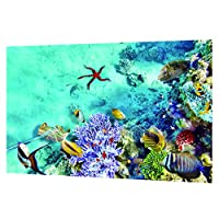 魚タンク 水中ポスター 水族館 水槽 ステッカー PVC バックグラウンド 3D画像 魚 水中世界 全3サイズ - 76×46