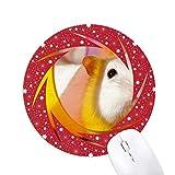 Weiße Ratte Tier Spiel Spielzeug Rad Maus Pad Runde Red Rubber