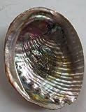 Abalone Shell Incense Burner - Large