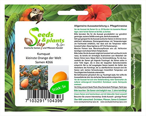 Stk - 5x Kumquat kleinste Orange der Welt Obst Pflanzen - Samen #266 - Seeds Plants Shop Samenbank Pfullingen Patrik Ipsa