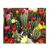 Cuadros Diamantes 5D - 5D Diy Diamante Pintura Cactus Floreciente Diamante - Completo Cuadrado Redondo Taladro Bordado Punto De Cruz Artesanía De Boda Artesanía Para El Hogar Decoración De Arte D