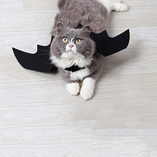 Black Cat Bat Wings