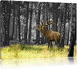 röhrender Hirsch im Wald schwarz/weiß Format: 60x40 auf