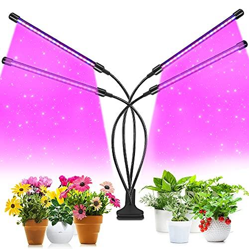 Growing Light Bulbs