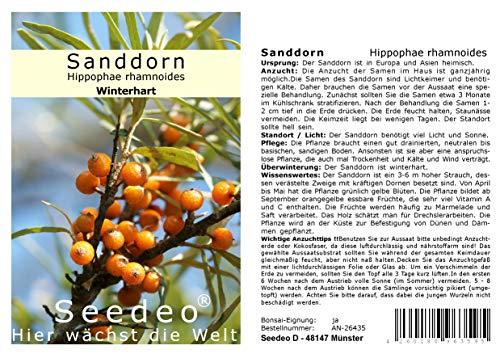 Seedeo® Sanddorn Hippophae rhamnoides 60 Samen