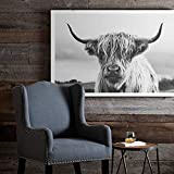 Scottish Highland Cow Art Print Poster Canvas Wall Art, Unframed, for Wall Decor Home Decor (Cow7, 24x36 inch)