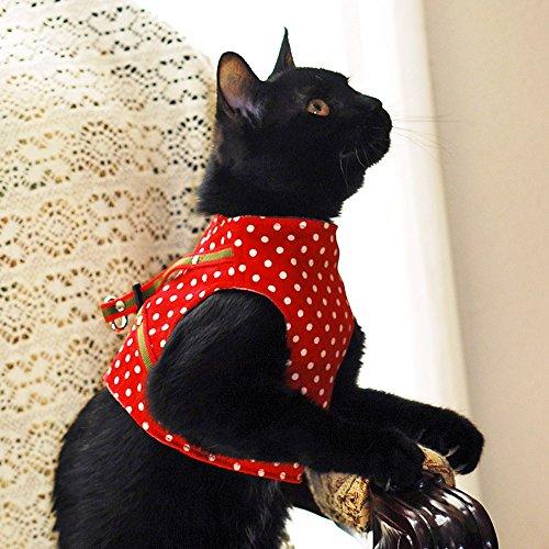 猫の暮らし『ハンドルベスト』