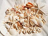 A品天然ヒトデ4Pとホタテ2P/白いサンゴ/色々な貝殻セット BIGパック インテリア手作り素材に