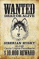 犬シベリアのハスキー