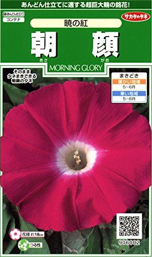 サカタのタネ 実咲花6002 朝顔 暁の紅 00906002 10袋セット