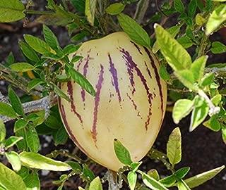 A 8 Pepino Dulce Seeds
