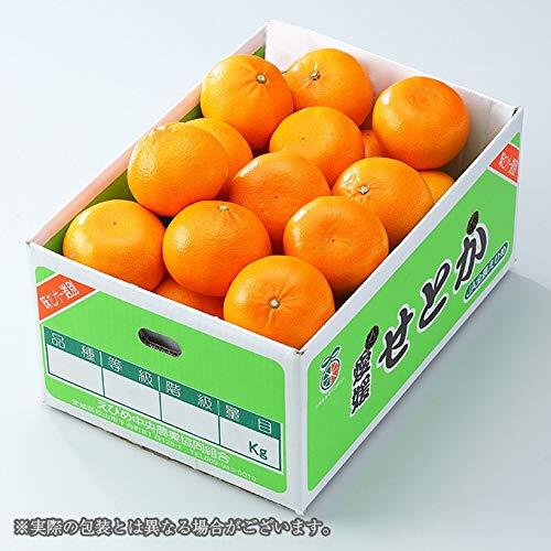みかん せとか 〇等級 4L〜Lサイズ 約5kg 愛媛県 中島産 ミカン 蜜柑 ホワイトデー ギフト 贈り物