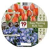 GreenBrokers Tulip & Chionodoxa Easy Planting Tray (19 Bulbs)