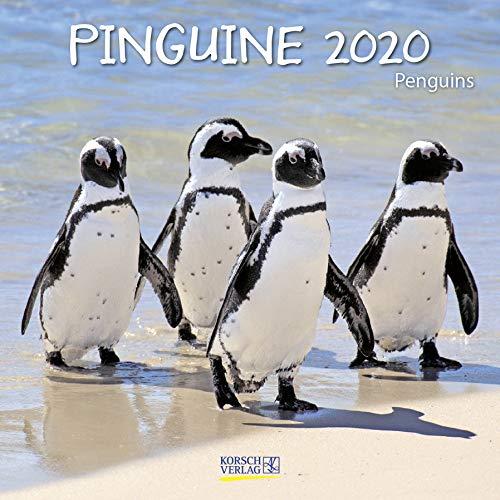 Pinguine 2020: Broschürenkalender mit Ferienterminen. Lustige Bilder der Eis-vögel. 30 x 30 cm