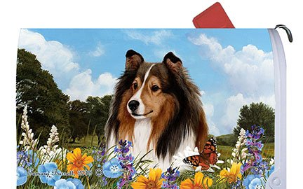 Best of Breed Sheltie Sable Dog Breed Mail Box Cover