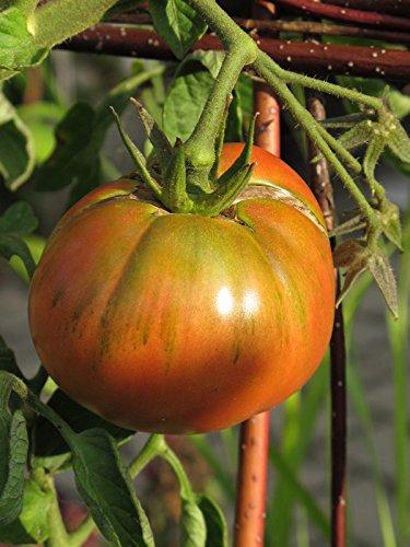 Aromatische Tomate 'Schwarze Krim' (Solanum lycopersicum) Bio 20 Samen