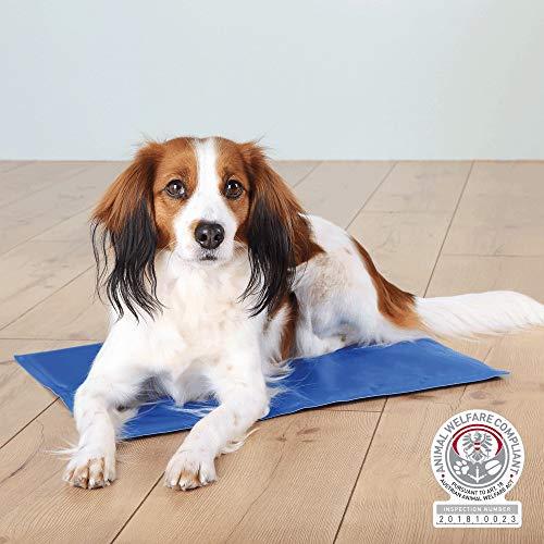 <div>Kühldecke für Hunde: Test & Empfehlungen (09/21)</div>