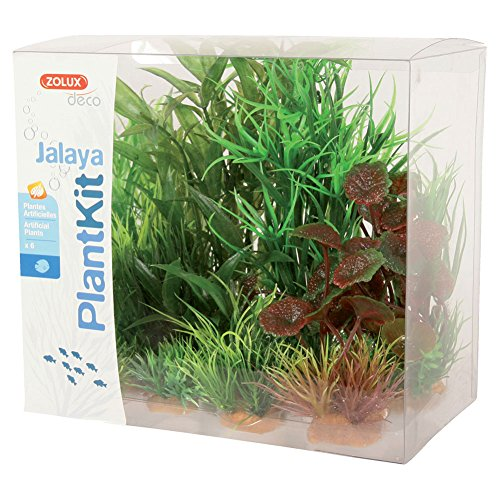 Plantkit Jalaya N°2