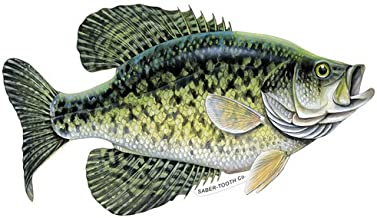Crappie Decal/sticker - Freshwater Fish Collection -Medium 11 X 6.5 Reverse Facing