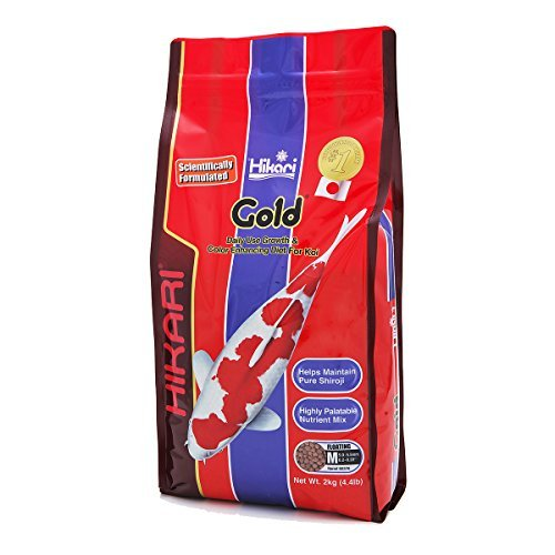 Hikari Usa Inc 02370 Gold 4.4 Lb, Medium