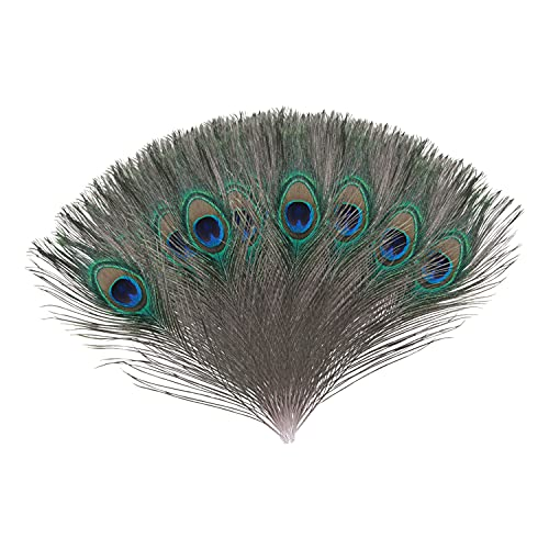 Trimming Shop Real Peacock Feather 10 inches – 12 inches Bird Tail Colourful Feathers Pack for Wedding Christmas Party Centerpiece Decoration, DIY Art & Craft, 10pcs