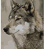 HAO Pintar por número Pintura Caligrafía Imagen de Lobo por Digital Acrílico Dibujado a Mano Dibujo Pintura para Colorear DIY por Decoración Digital de la Pared 40x50cm Sin Marco