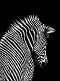 ZXDA Dipinti Fai-da-Te in Base ai Numeri Immagini artistiche di Animali in Bianco e Nero Colorazione Decorativa su Tela Wall Artcraft Pittura a Olio in Base ai Numeri A13 40x50cm