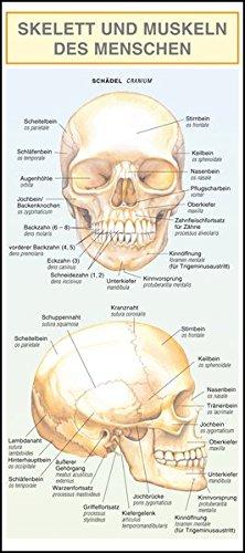 Skelett und Muskeln des Menschen.: Mit Illustrationen anschaulich und verständlich dargestellt