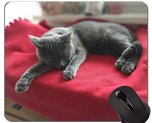 Mauspads und Oriental Shorthair Cat Gaming Maus-Pads Kurzfristiger Geschenk-Bedarf?