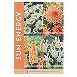 Happy Summer Mix - Blumenzwiebeln für Schmetterlinge und Bienen im Sommer in Geschenkverpackung - mehrjährig, viele botanische Sorten gemischt für idyllisches und buntes Beet im Garten - (Sommer Mix)
