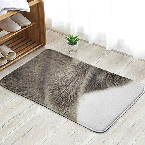 YYUTR Raccoon 9 Months Procyon Lotor Front Animals Wildlife Transportation Fun Welcome Doormat Personalized Indoor Floor Mats Living Room Bedroom Bathroom Door Mat 16x24(IN)