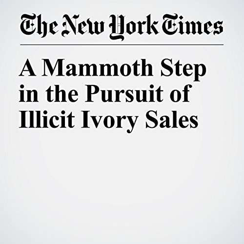 A Mammoth Step in the Pursuit of Illicit Ivory Sales copertina